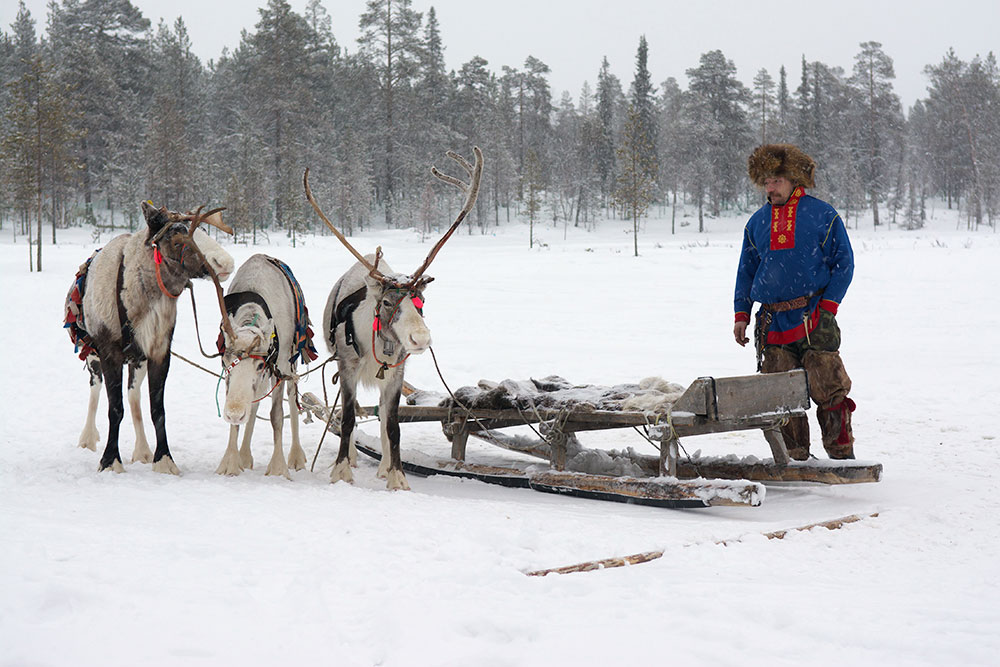 Reindeer are used for more than just Santa