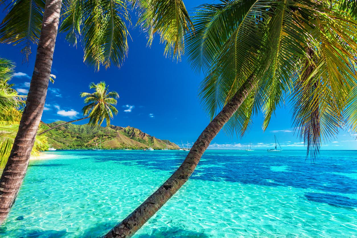 Palm trees on a tropical beach of Moorea, Tahiti