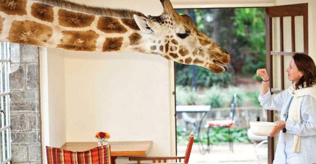 Giraffe-Manor-Kenya