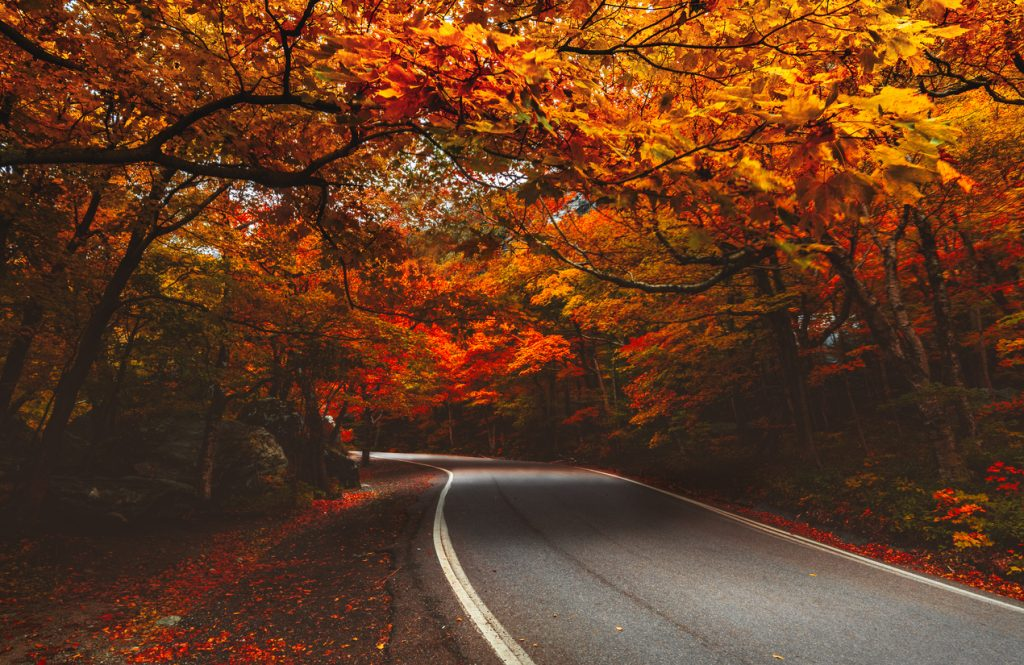 Trees in the heart of Autumn showing their vibrant over a road in New England