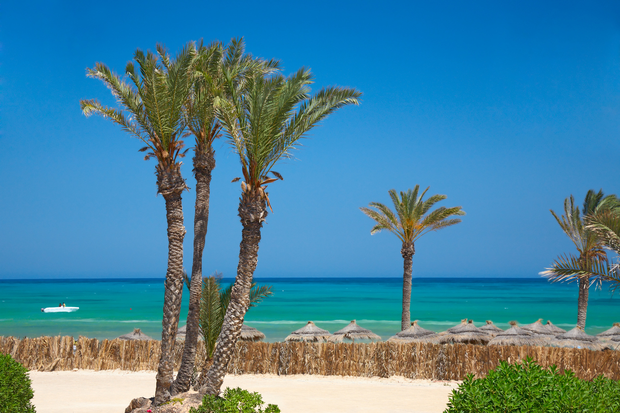 Thatched sunshades and palm trees, Tunisia, Djerba