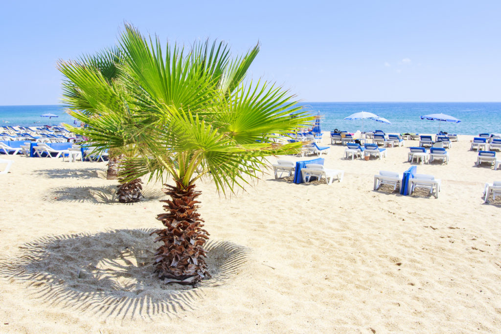Palm trees on the beach in Alanya on clear sunny summers day