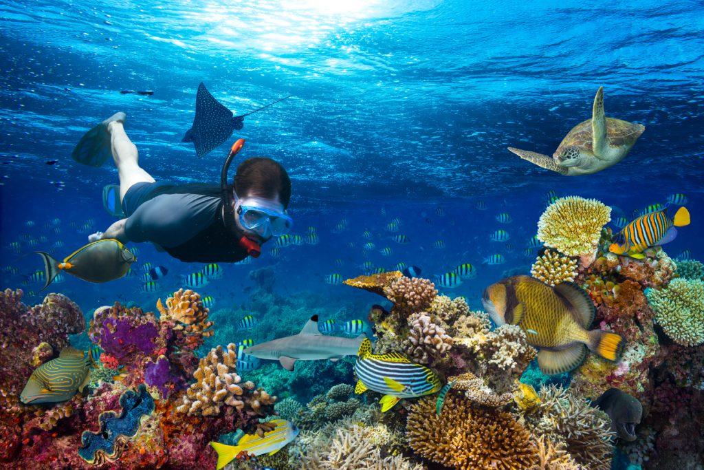 Snorkelling exploring underwater coral reef landscape