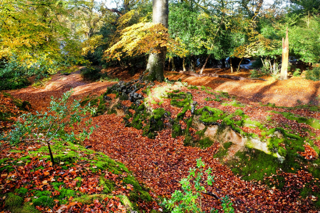 A golden autumn leaf covered pathway in the New Forest, England