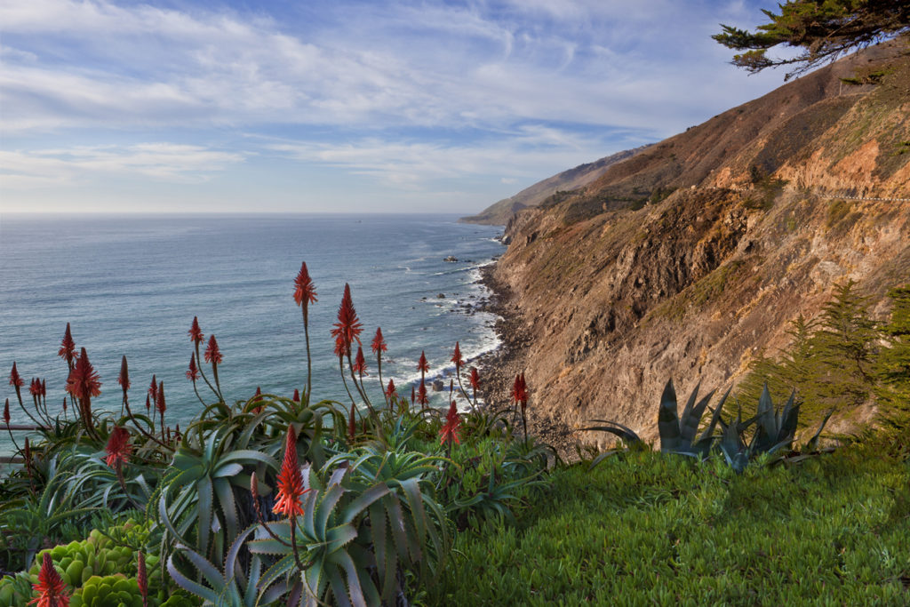 Aloe and ice plant on the cliffs above California's central coast near Big Sur.