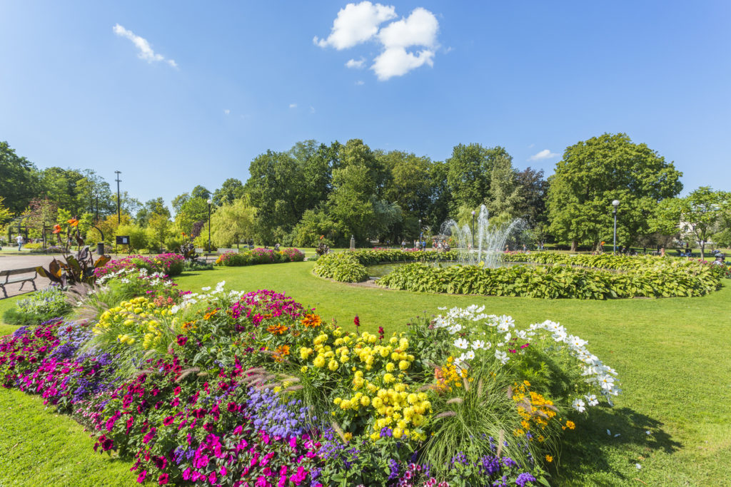 Flowering flowerbeds and a fountain in a public garden
