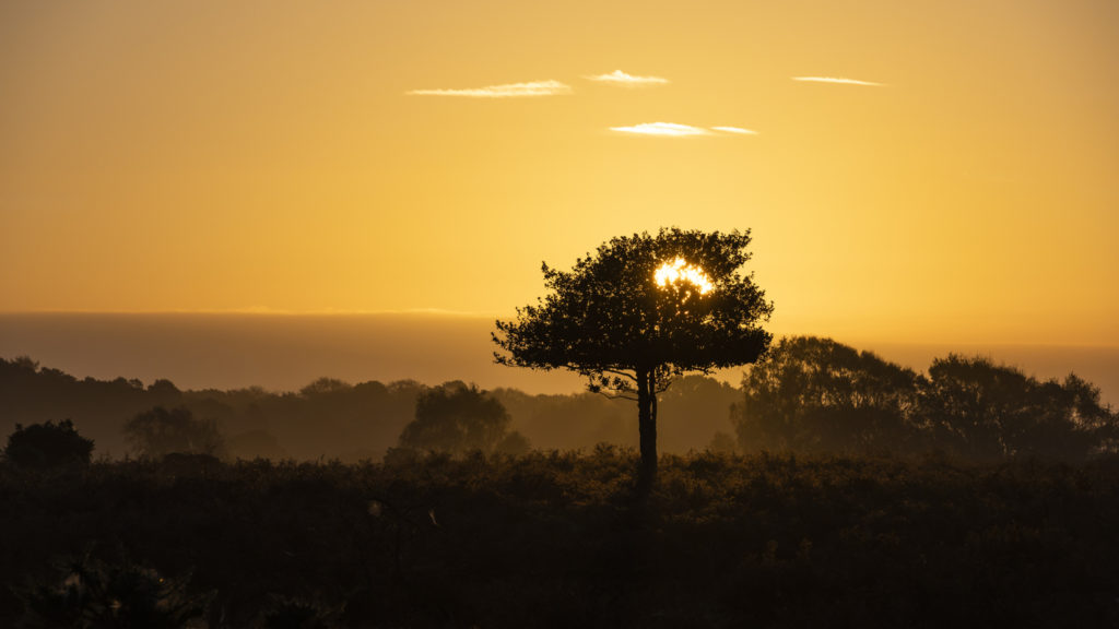 New Forest Looking Amazing