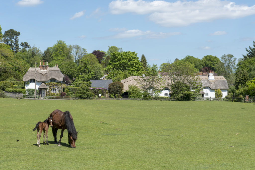 Pony and Foal at Swan Green, Emery Down, New Forest