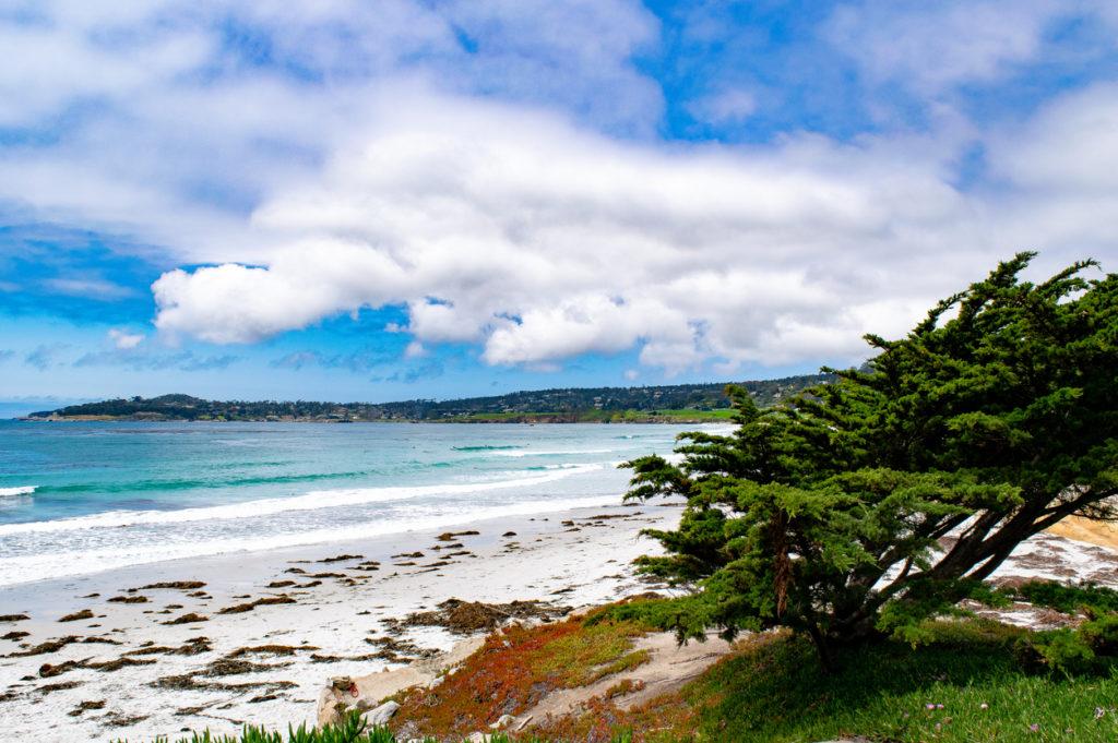 Cypress Tree on Carmel Beach
