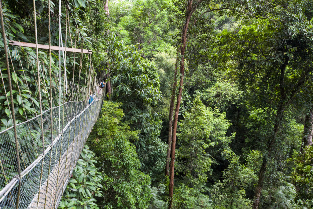 Suspended bridge of the canopy walks at the deep forest of Pahang