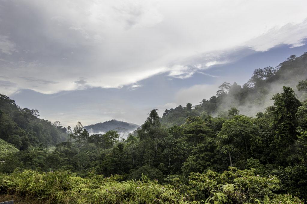 Rainforest in Taman Negara National Park, Malaysia
