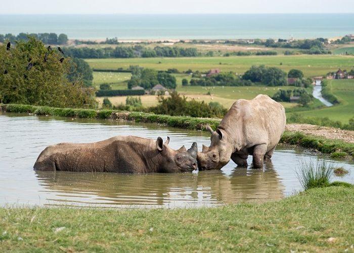 Port Lympne Hotel and Reserve Rhino