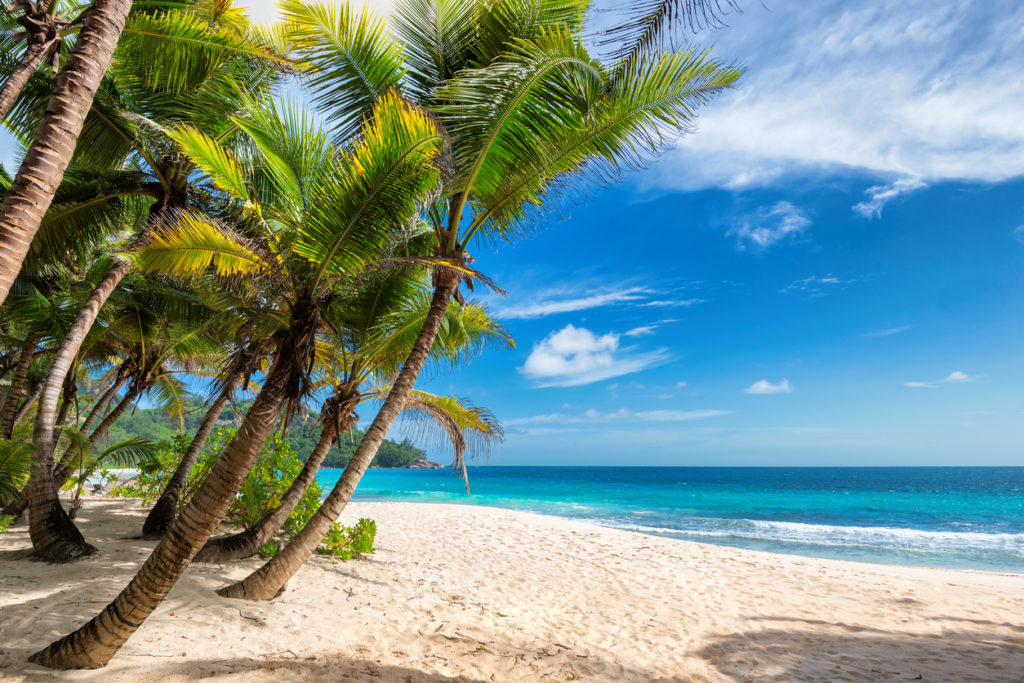 Jamaica sandy beach and coconut palm trees
