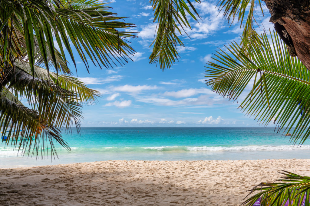 Jamaica tropical sandy beach