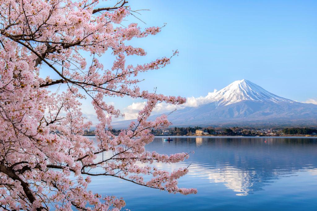 Mount fuji at Lake kawaguchiko with cherry blossom in Yamanashi near Tokyo, Japan