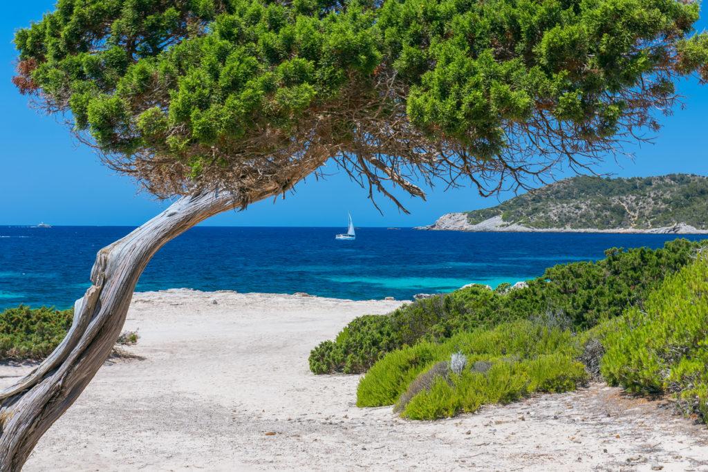 Tranquil Ibiza
