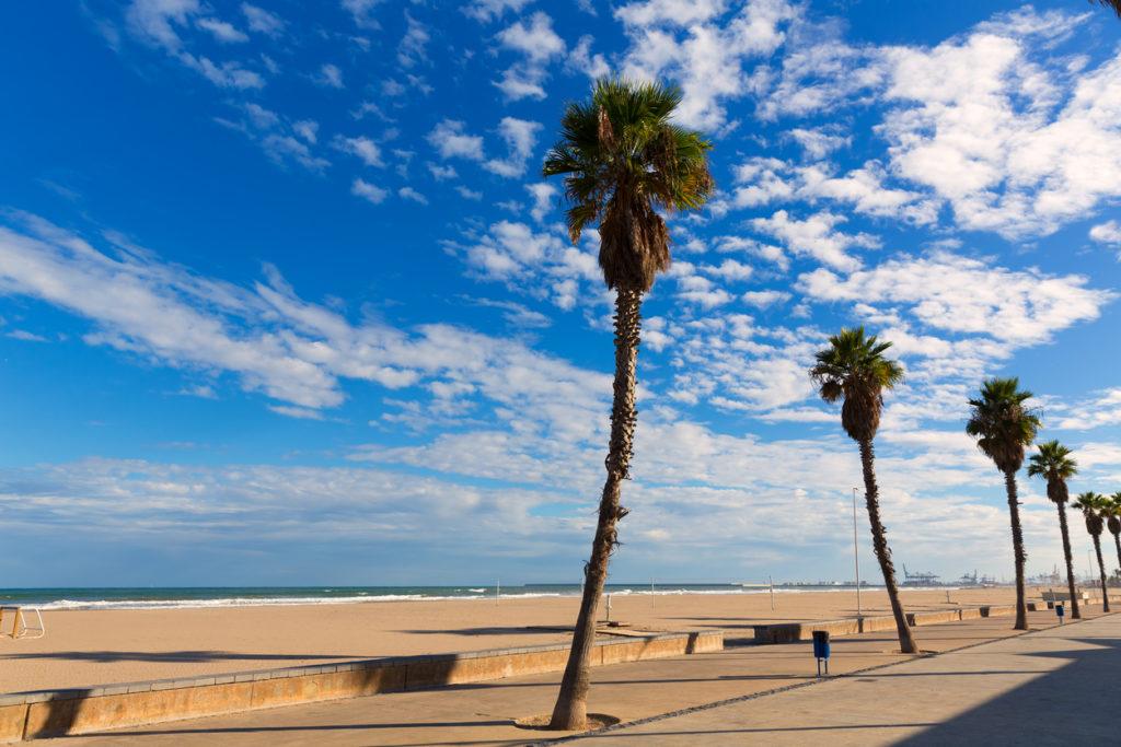Valencia Malvarrosa Las Arenas beach palm trees in Patacona of Alboraya spain