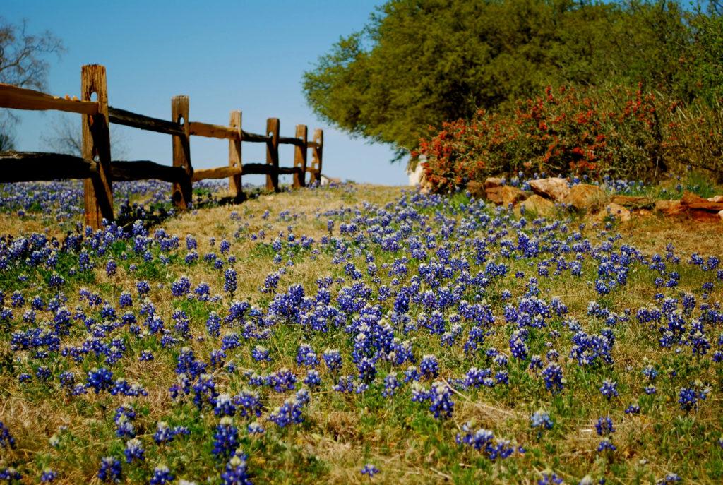 Texas Ranching Vacations