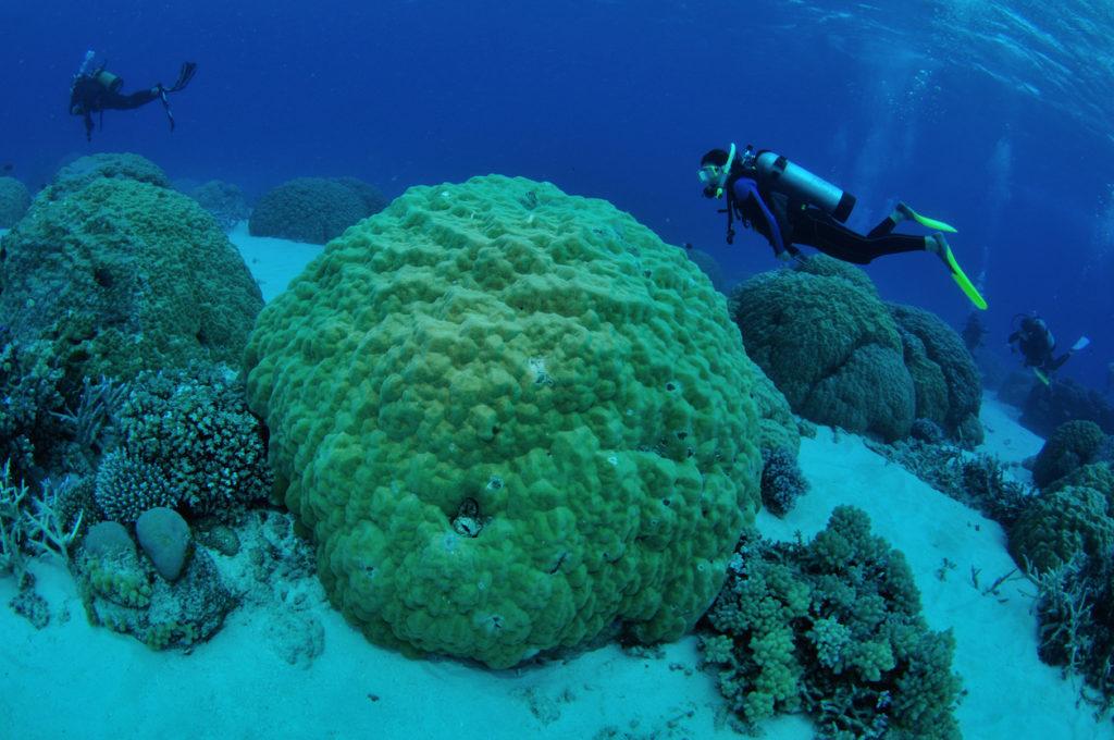 Diver exporing coral gardens, Agincourt Reefs, Port Douglas, Great Barrier Reef, Australia