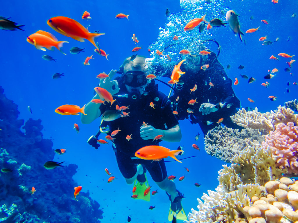 Diving at the Coral Reefs in the Red Sea