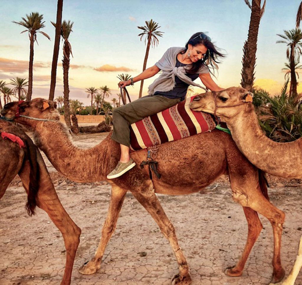 Camel at Sunset in the desert outside of Marrakesh