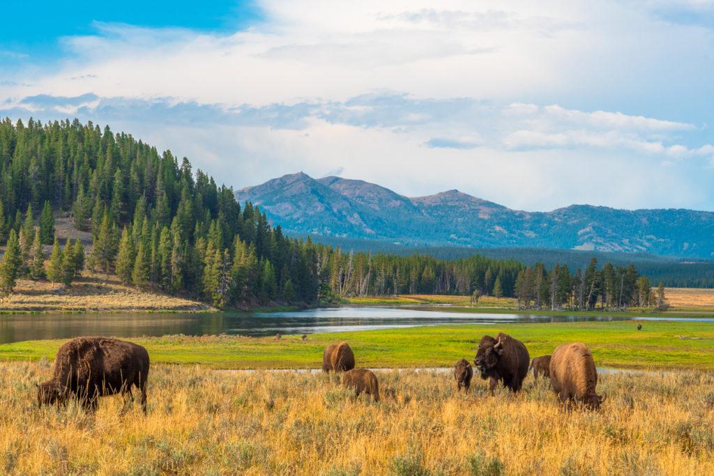 Yellowstone, National Park, Wyoming