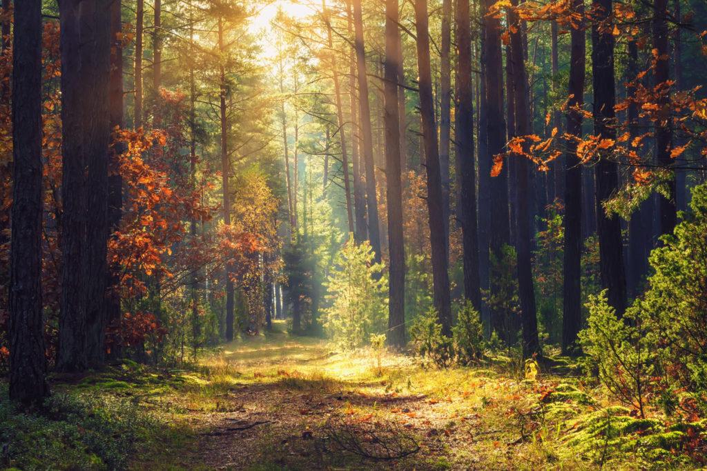 Amazing woodland in Belarus