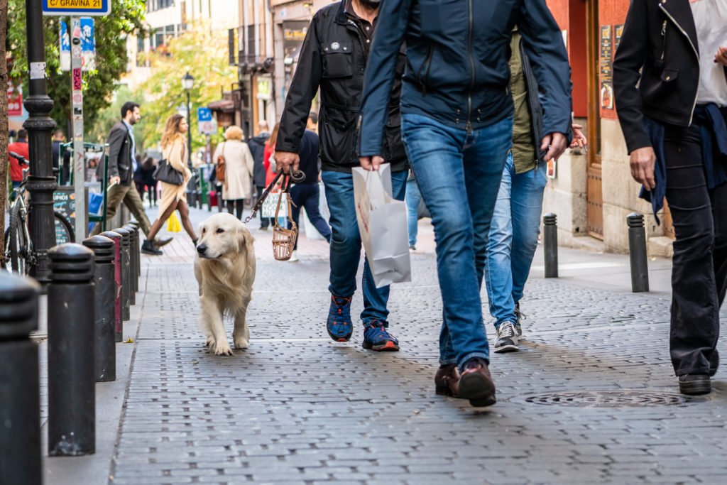 Dog Friendly Hotels Worldwide