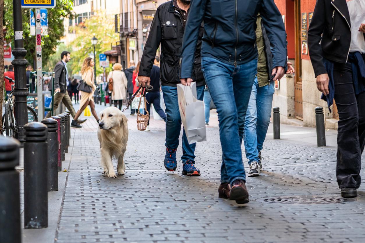 Dog Friendly Hotels Worldwide