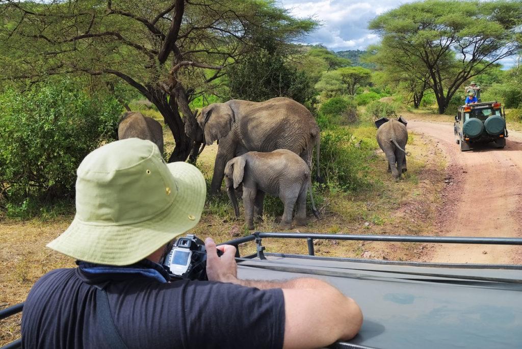 Family of elephants in Lake Manyara National Park, Tanzania, Africa