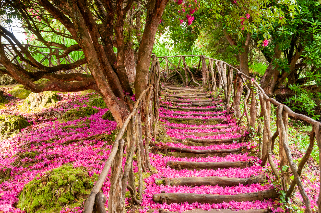 Hiking trail in Madeira