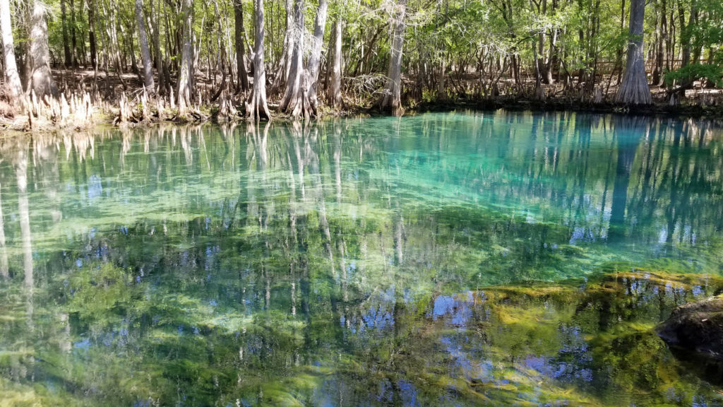 Manatee Springs State Park in Chiefland, FL