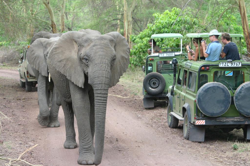 Safari Tourists watch Elephants, Lake Manyara, Tanzania