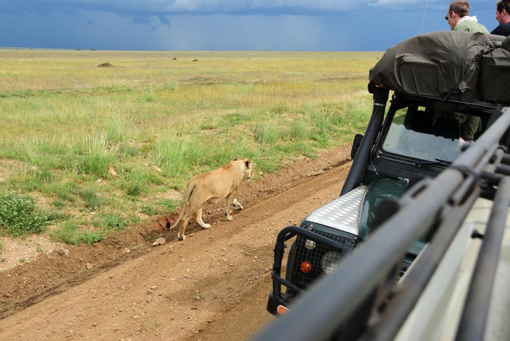 Serengeti. Tanzania