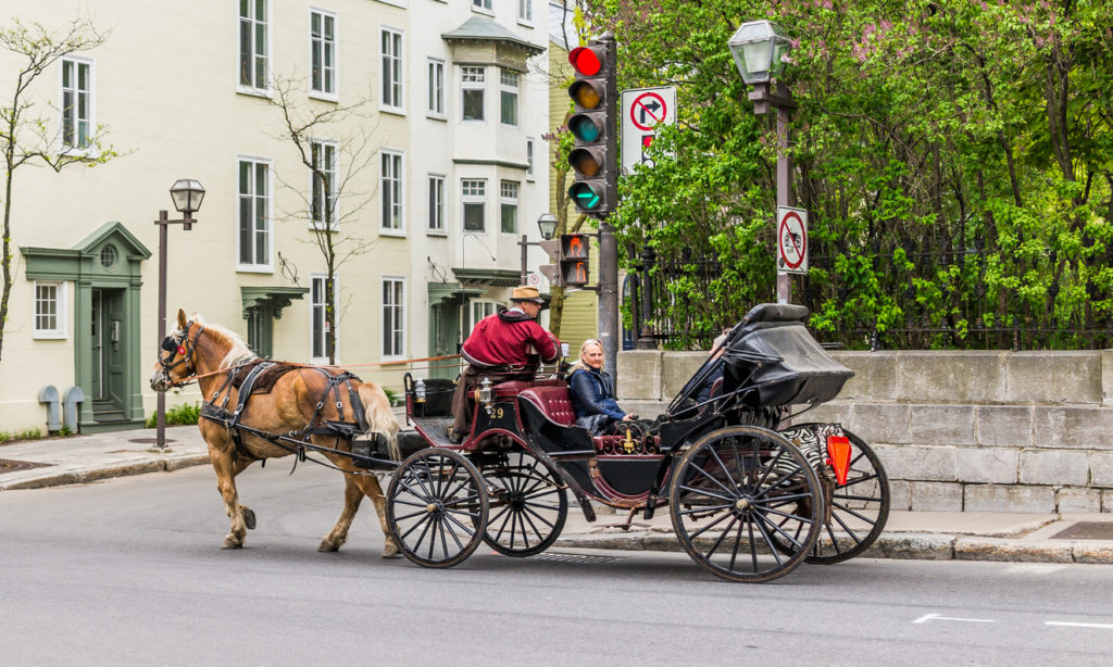Horse Carriage Buggy for Tourists in Quebec City