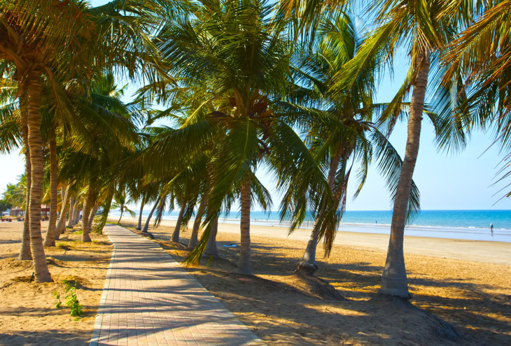 White sandy beach of Oman. Sea, palm trees, clean sand