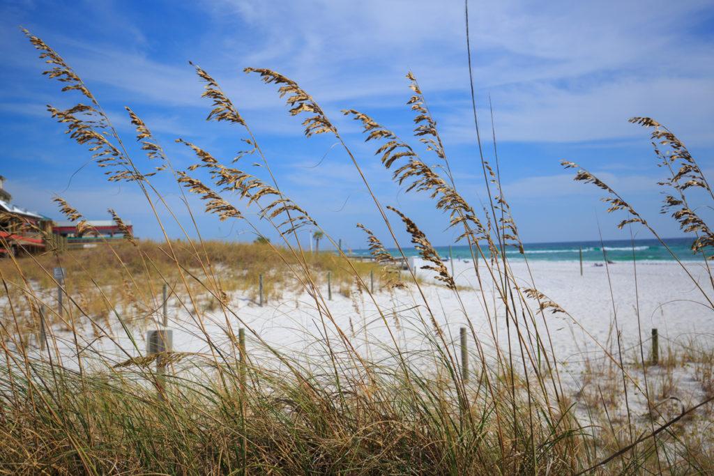 Wild grasses on Henderson state park beach