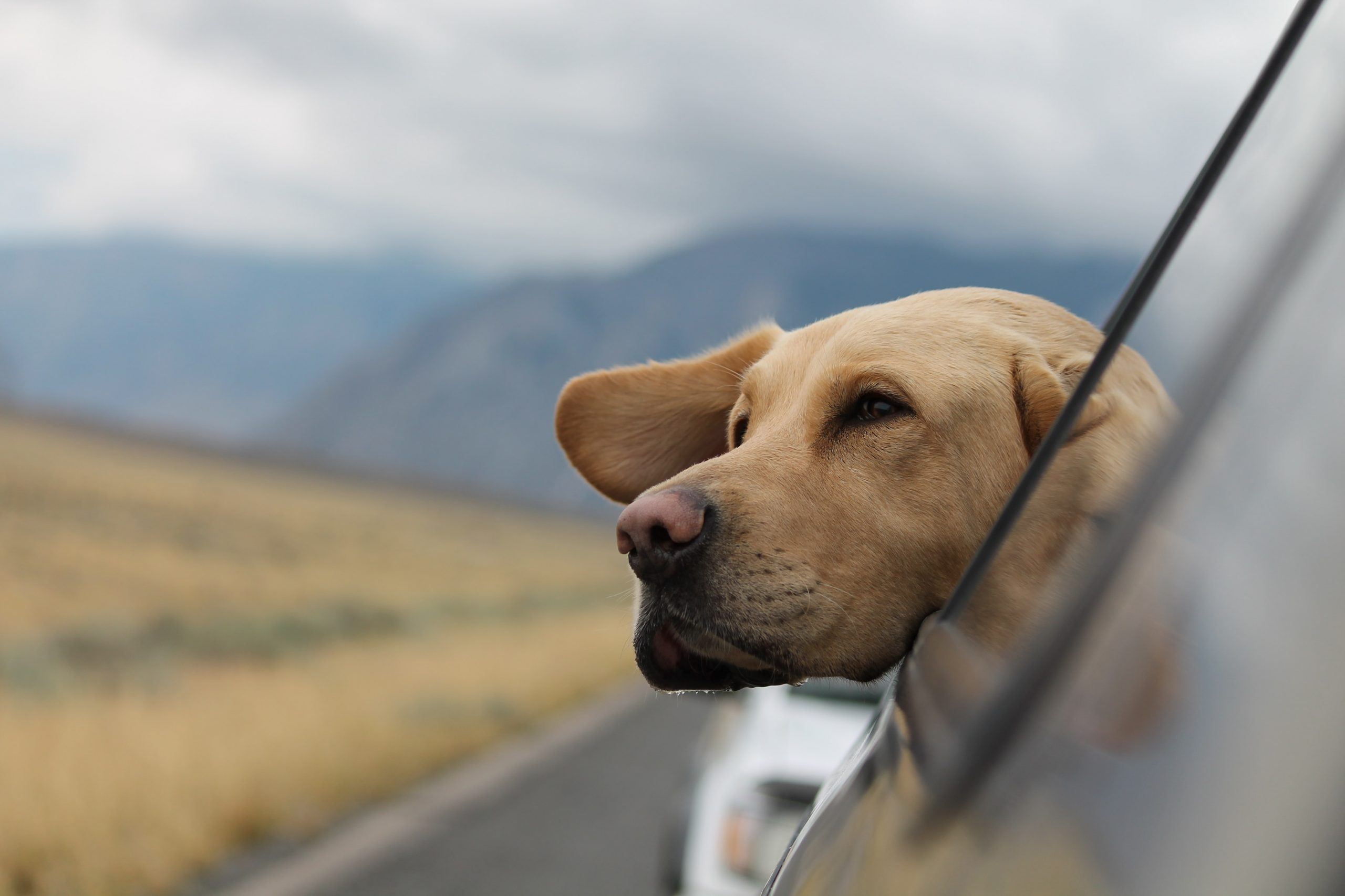 5 Best Pet-Friendly Road Trips