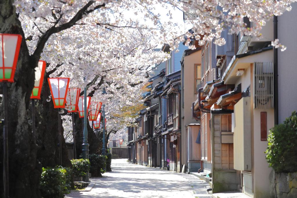 Cherry blossom Higashiyama teahouse old house street Kanazawa