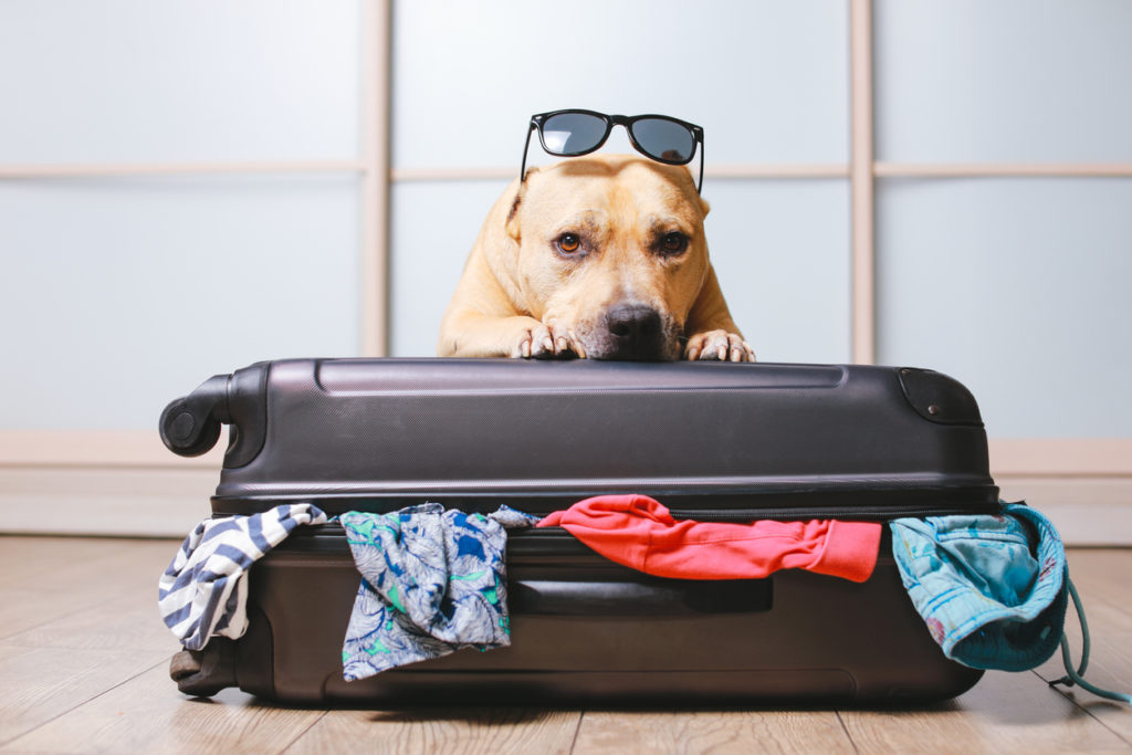 Traveling With Your Puppy