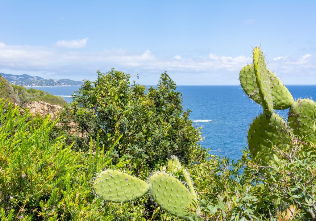 Costa Brava seascape