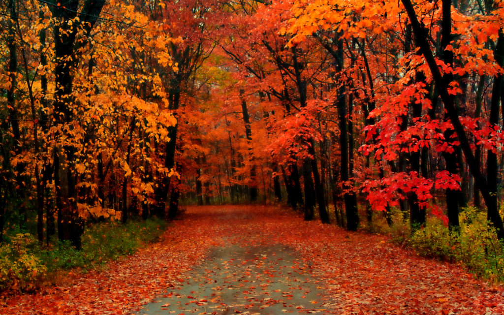 Minnesota Country Road in the Fall