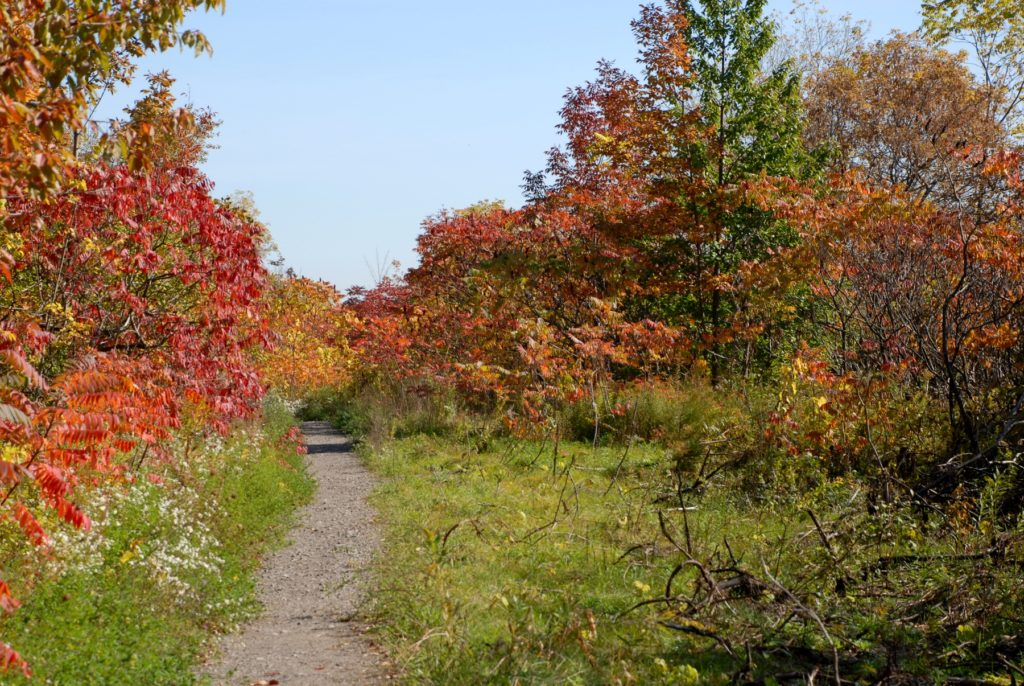 The Bruce Trail in Fall